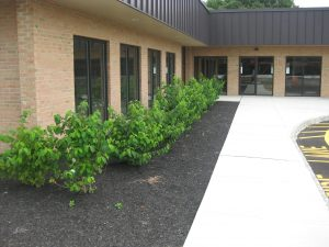 commercial-landscaping-services
